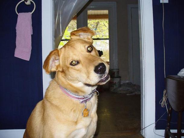 My Dave dog