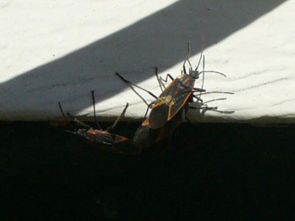 Boxelder Bugs Must Die! | I'm not stalking you
