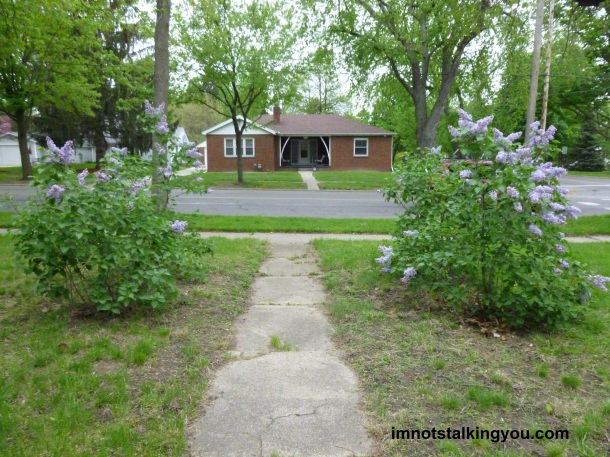 The view of my lilacs, looking from my house toward the street.
