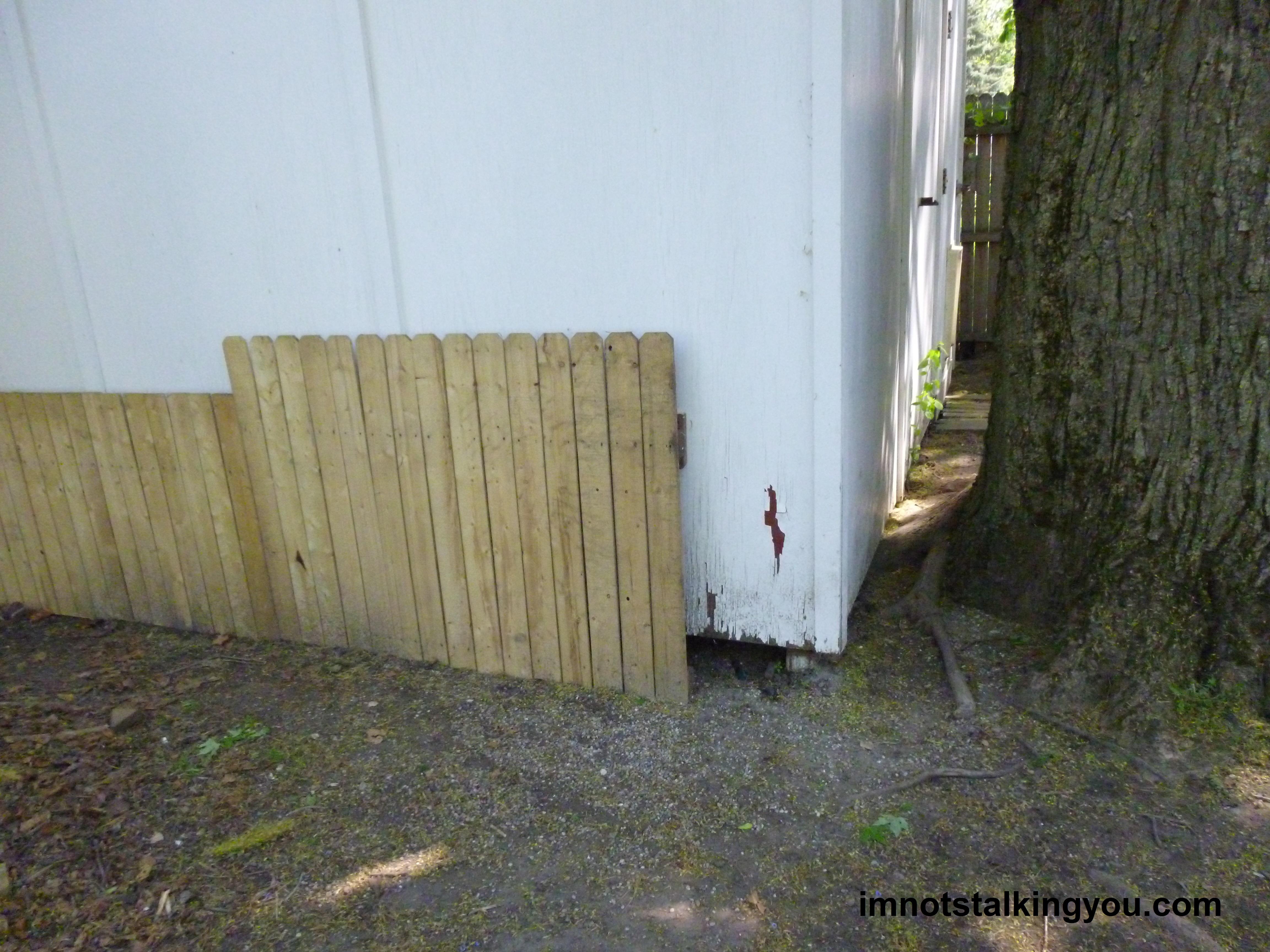 German shorthair pointer i 39 m not stalking you for Garage fence