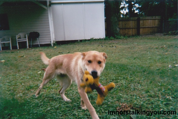 My wild dingo, the first day we got her back in 2004.