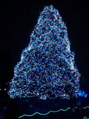 Big Tree at The Toledo Zoo