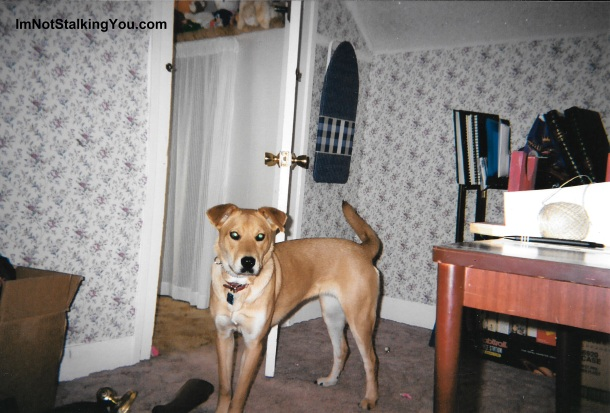Before of the bedroom with wallpaper. Had to use this picture of my skinny puppy. She hasn't been that thin in 10 years.